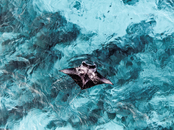 10 COOL FACTS ABOUT MANTAS