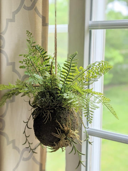 Fern Drop-in