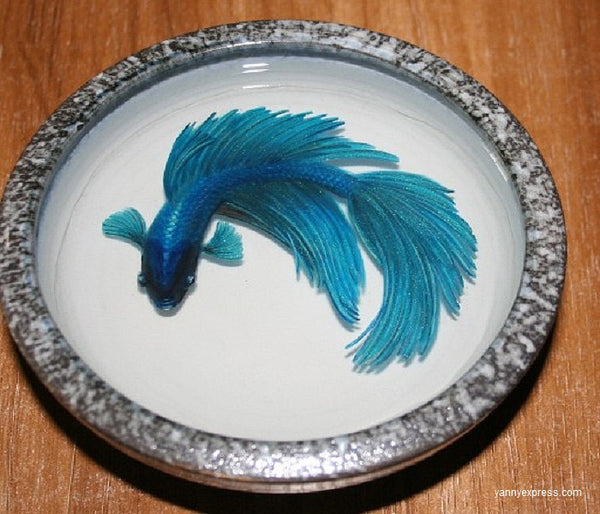 3-D Painting Halfmoon Betta Fish Resin Water Riusuke Fukahori - YannyExpress  - 1