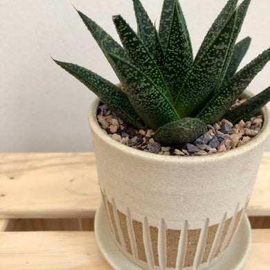 Raw Groove Planter - Light Stoneware