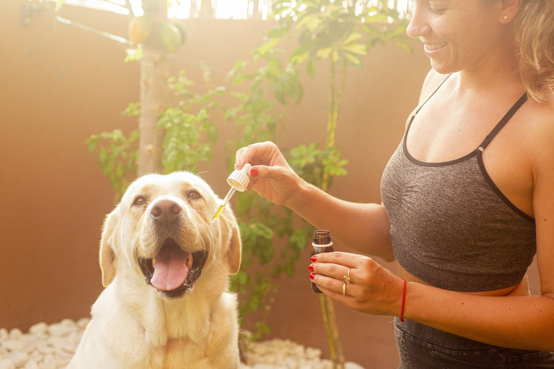 Is Eucalyptus Essential Oil Safe For Dogs Here Is The Answer