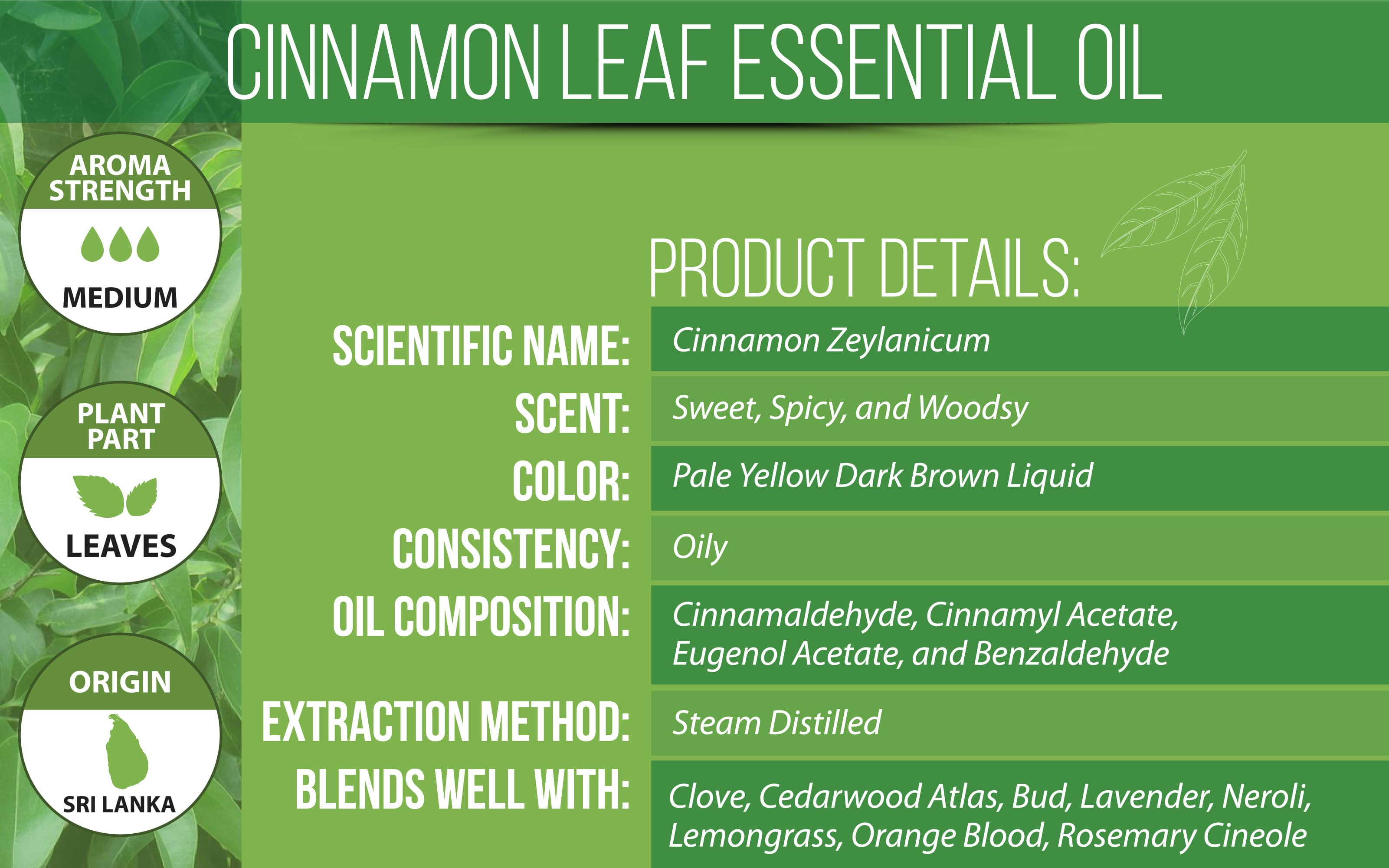 cinnamon leaf essential oil details