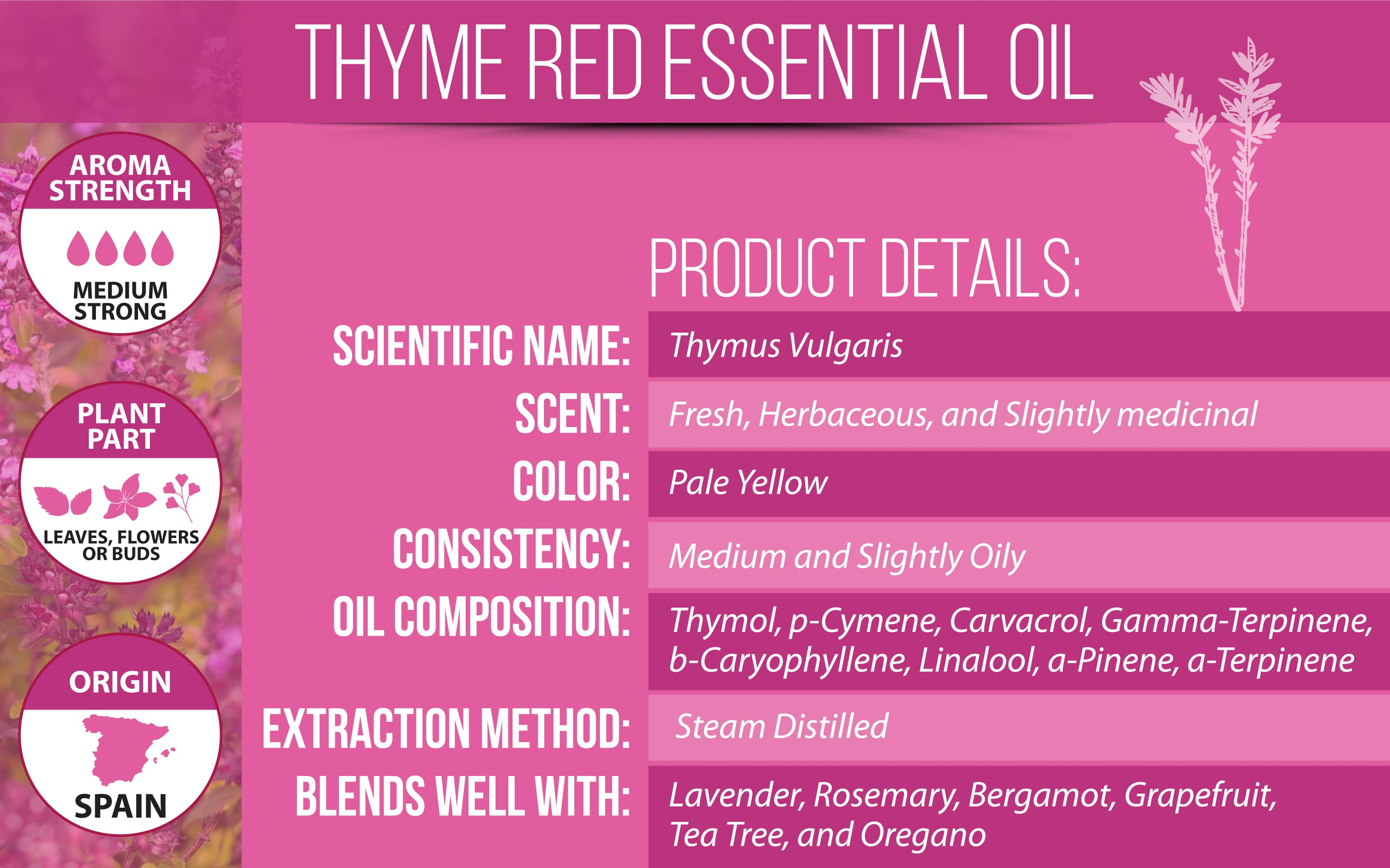 red thyme essential oil product details