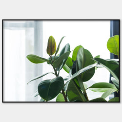 House Plant Wall Poster