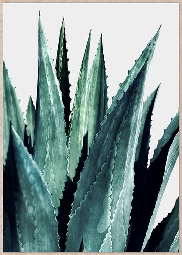 Toile - Agave