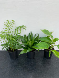 Plantes tropicales assorties 3.5po 3/$12