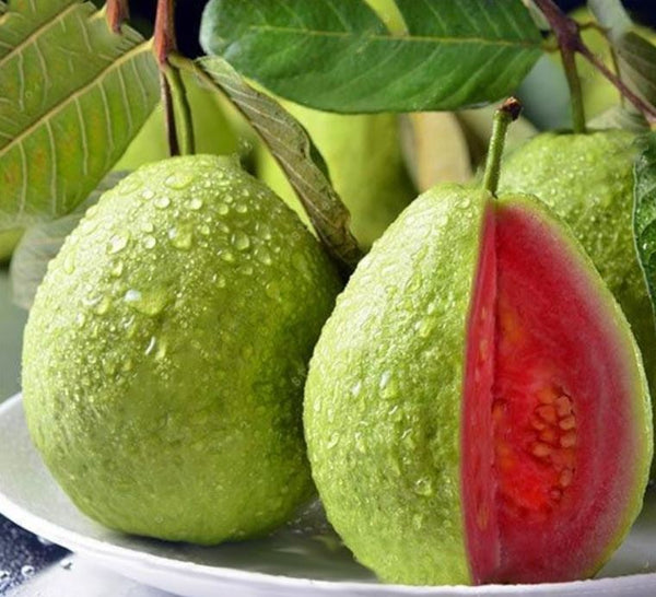 Taiwan Guava, Pink Guava - Fruit Plant