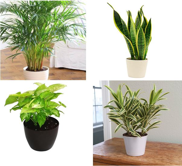 airpurifier-plant-pack