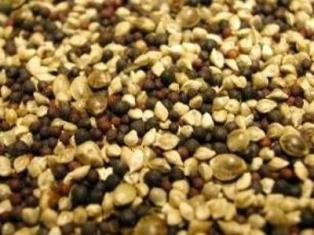 Sunseed Finch Vita Mix