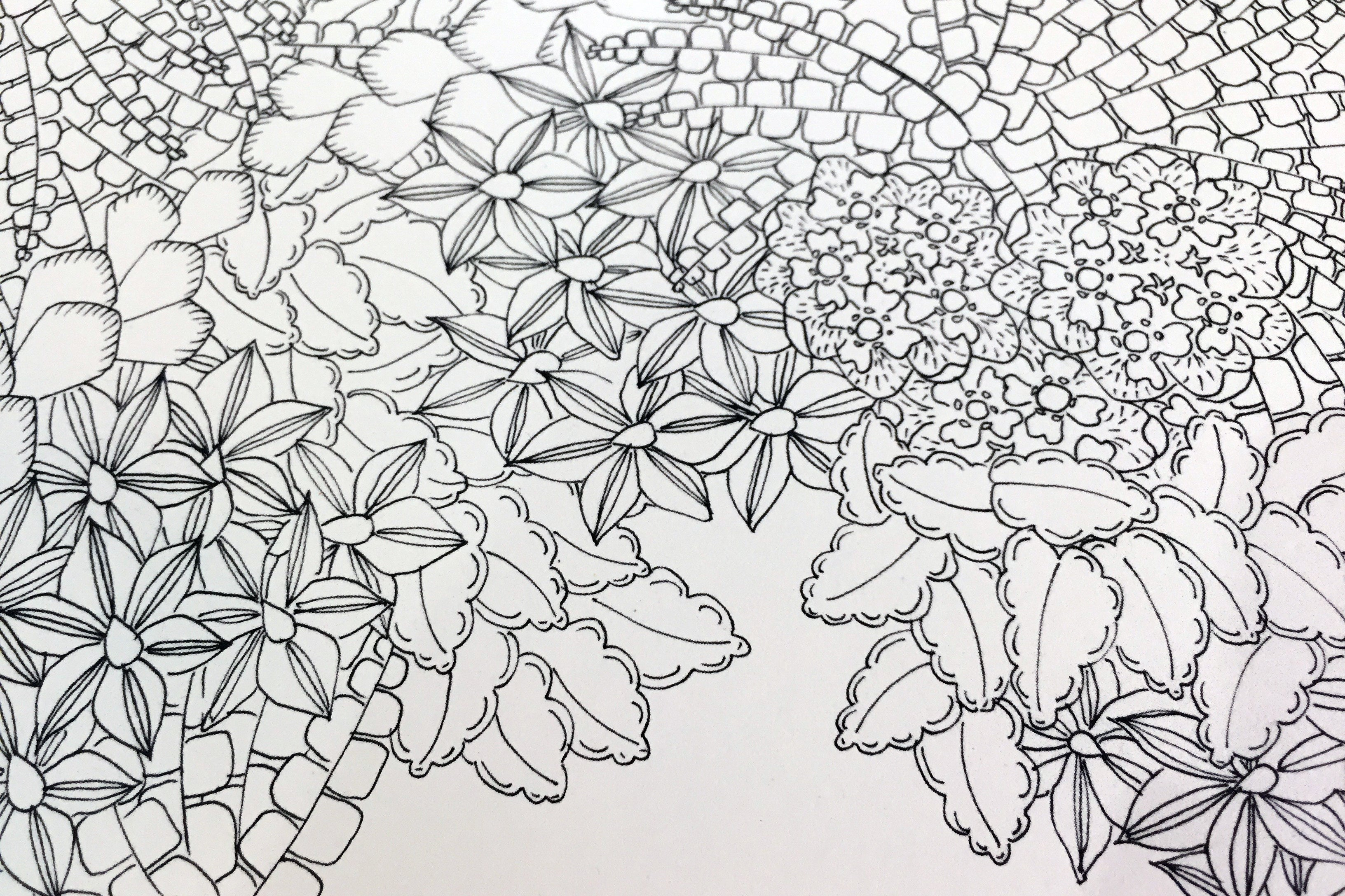 patterns of flora colouring book - Pattern Colouring Books