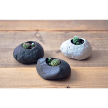 Load image into Gallery viewer, Grow Your Own Cactus -Dark Grey Rock