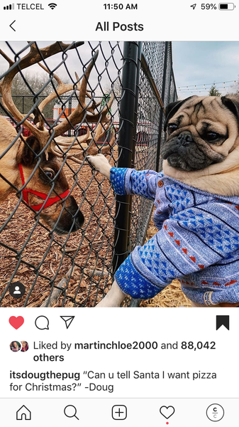 Instagram Post, pug and deer