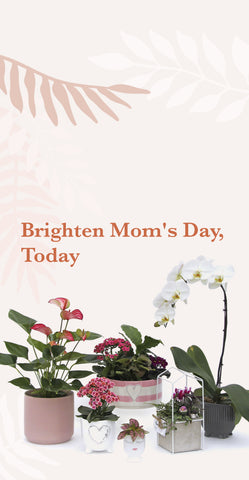 Brighten Mother's Day with botanical flowers at Vandula Farms