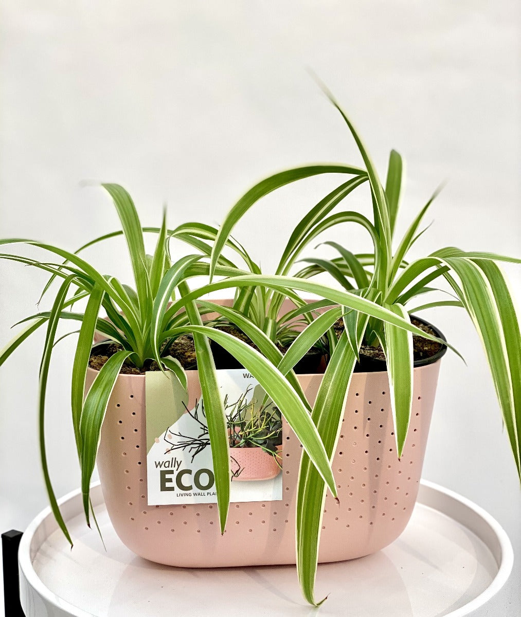 Living Wall Planter - Eco Rose