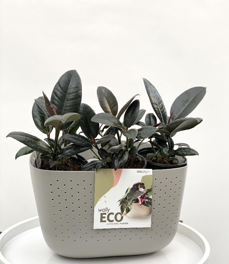 Living Wall Planter - Eco Stone