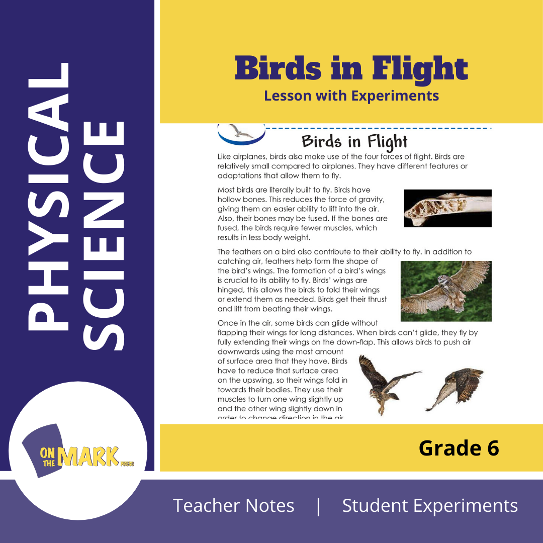 Birds in Flight Grade 6 Lesson with Experiments