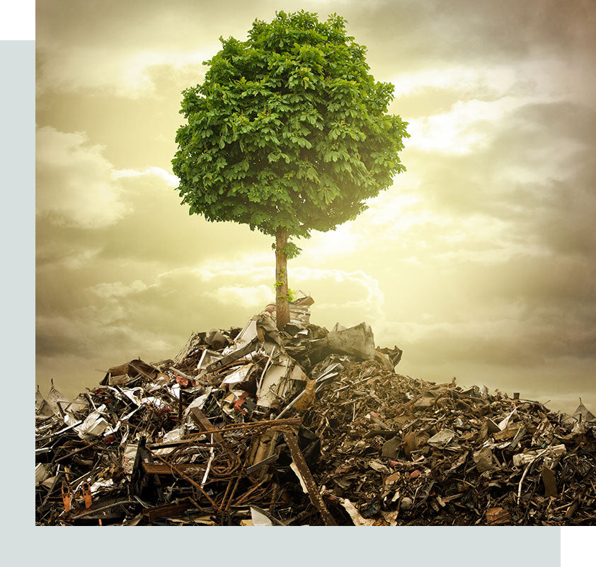 A green tree on the top of a heap of garbage.