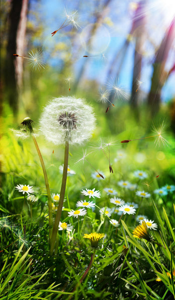Treating Spring Allergies and Hayfever with Homeopathy
