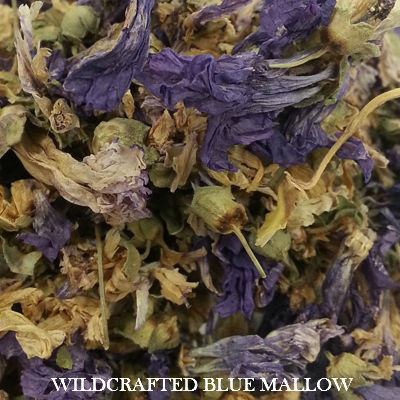 Wildcrafted Blue Mallow Flowers