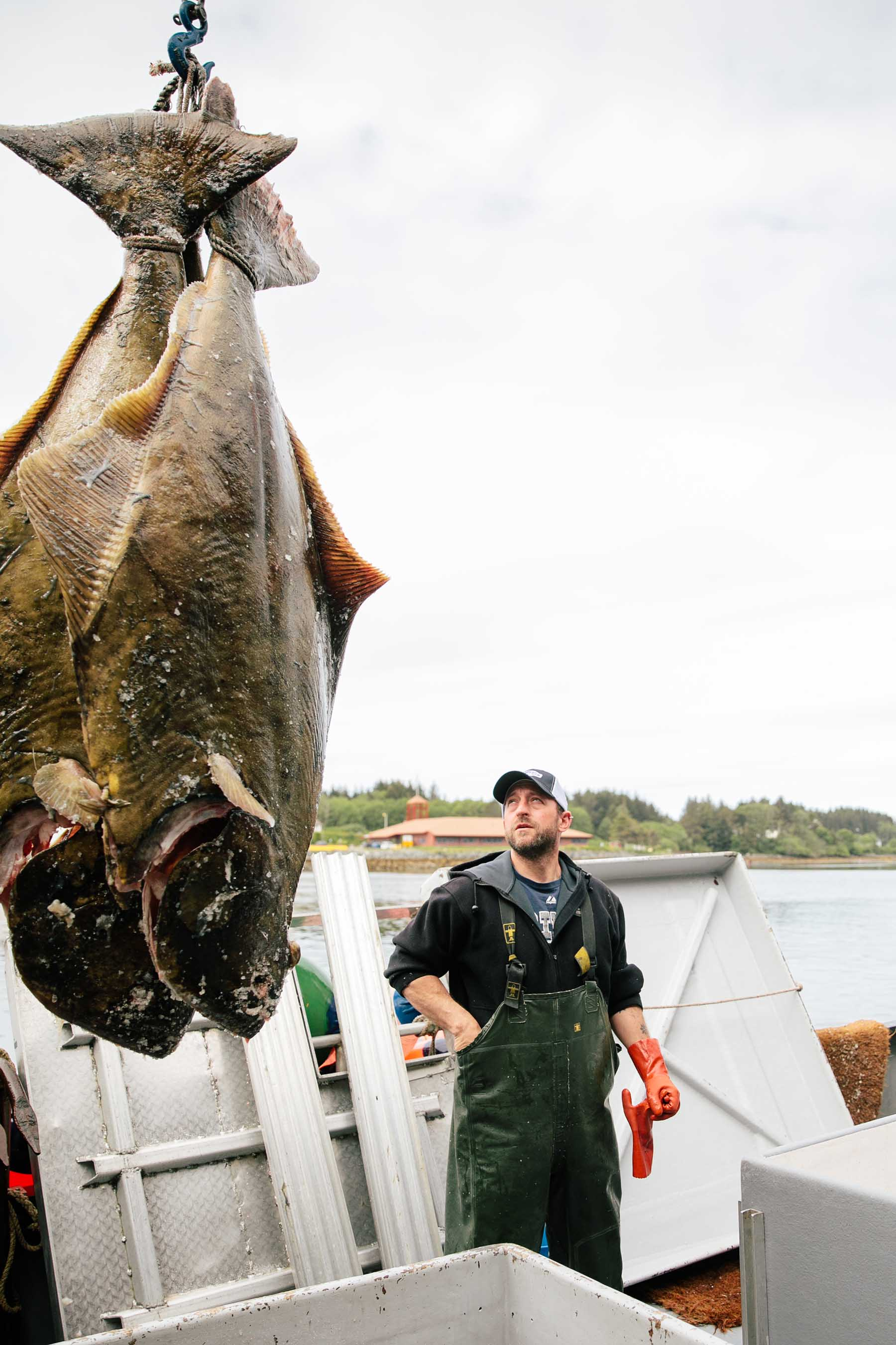 halibut unload