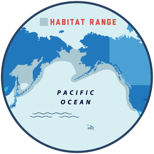 Pacific halibut range