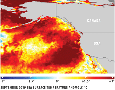The infamous 2014 warm water mass in the Gulf of Alaska known simply as 'The Blob'