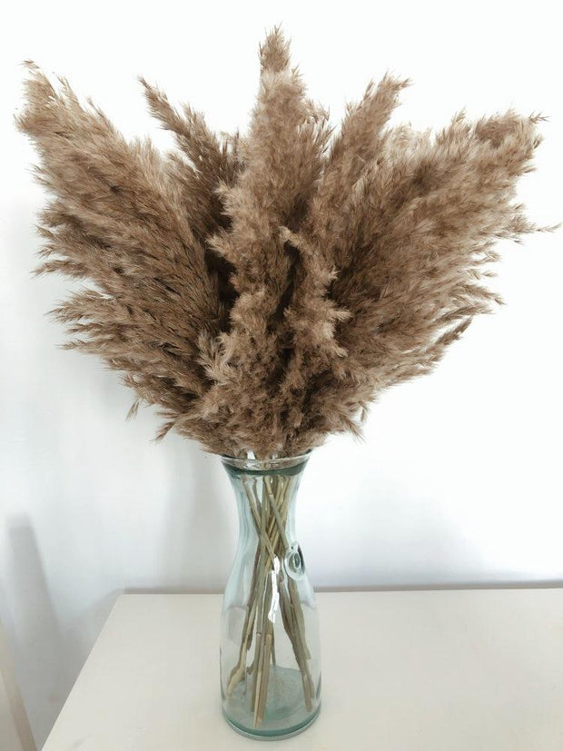 Dried Natural Pampas Grass - Unwindin