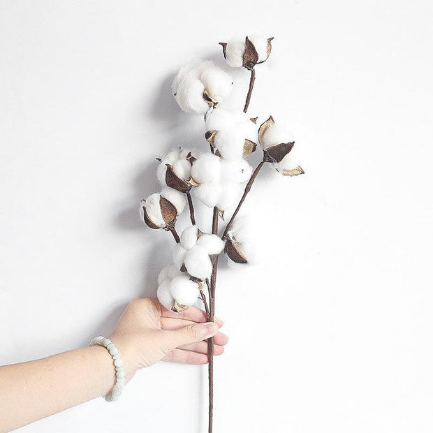 Natural Dried Cotton Branch (10-Buds) - Unwindin