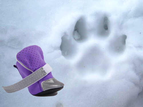 Chaussons Flashy pour chien - Husky-Academy.fr