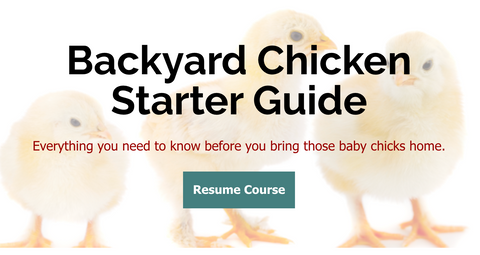 Backyard Chicken Starter Guide
