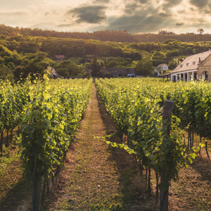English vineyards: best places to visit this summer