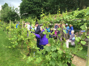 Sunday 9th June 2019 at 2pm - WINE LOVER Tour