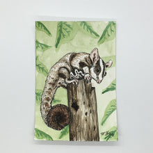 Load image into Gallery viewer, Sugar Glider