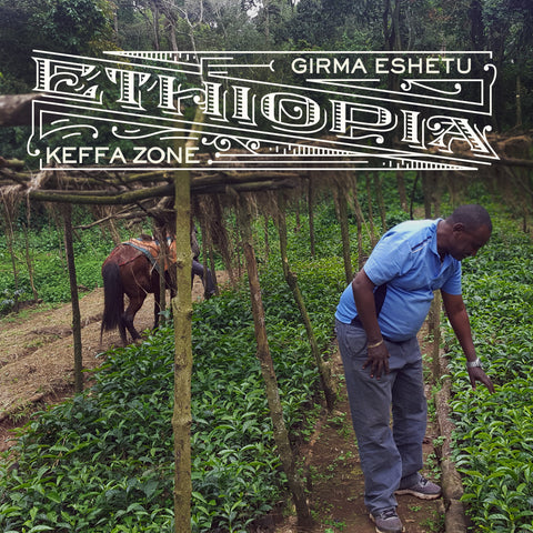 Ethiopia - Girma Eshetu, Washed Process