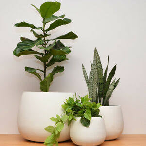 Pots Set of 3 Fibreclay White