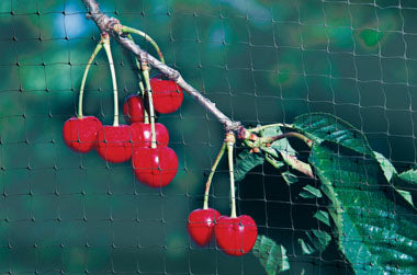 Apollo Fruit Cage Net 16m x 2m