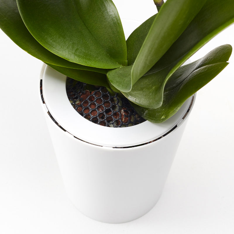 Pot suspendu renversé en plastique grand Sky Planter blanc