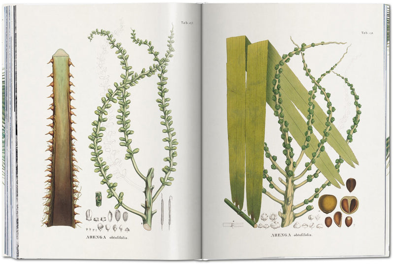 "Livre décoratif sur la nature ""The Book of Palms"""