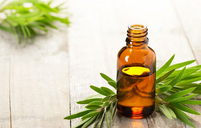 Can Tea Tree Oil Help Get Rid of Acne?