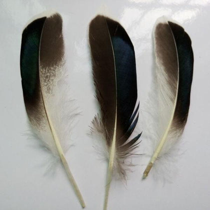 Duck Feathers Natural 10/pk