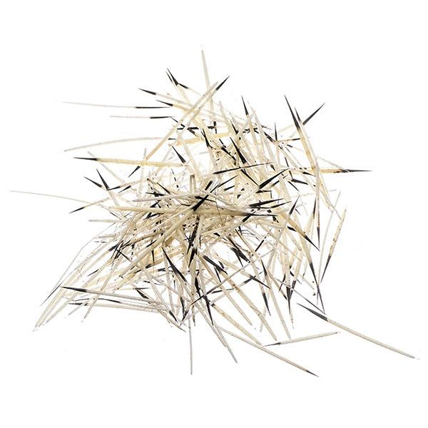 Natural Porcupine Quills 14g
