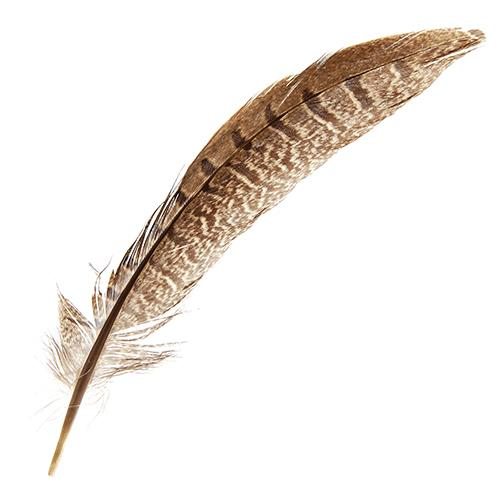 Pheasant Tail Feathers Natural 10/pk