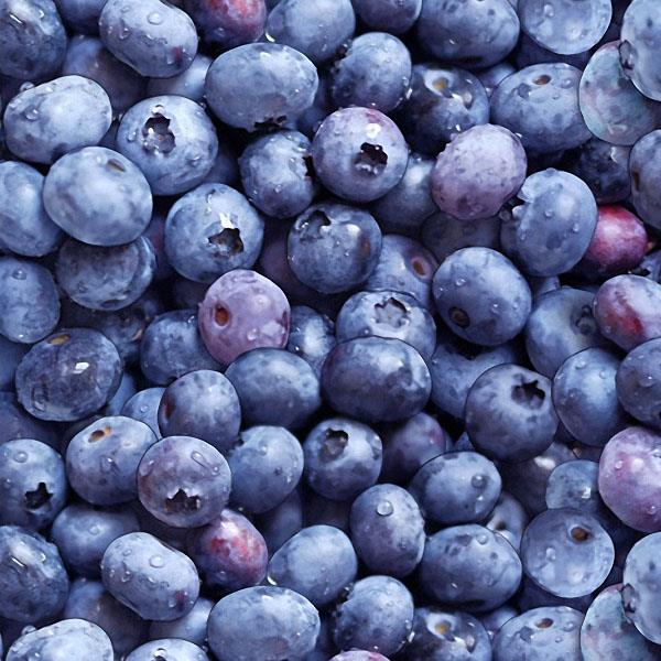Blueberries Blue 100% Cotton - Price Per Yard