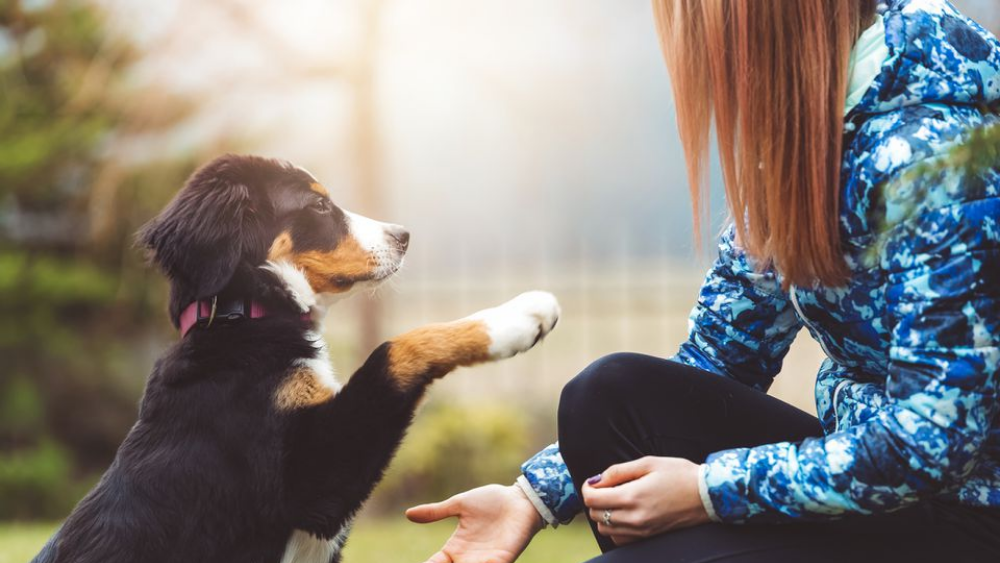 Tips for a perfect puppy training