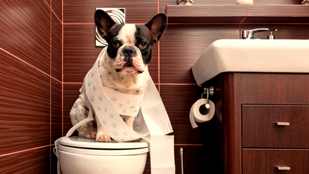 5 Techniques to Potty Train your Puppy
