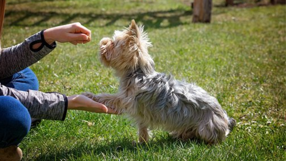 5 Dog Training Tips to Keep Your Dog's Mind Healthy