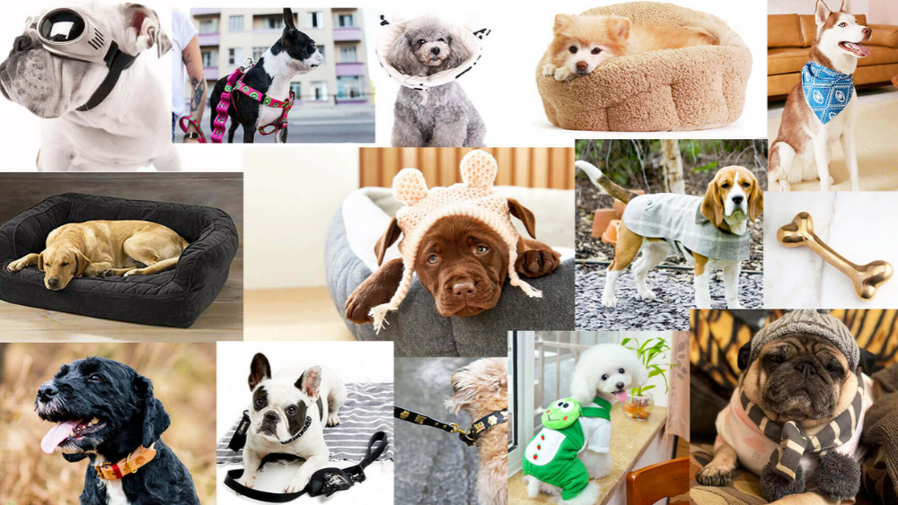 Trendy and unique accessories for dogs