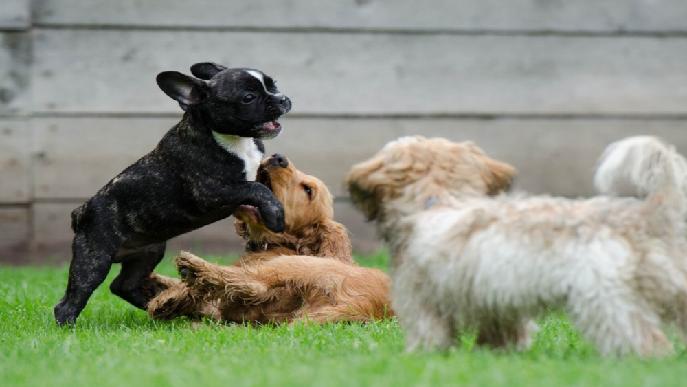 4 Low Maintenance Dog Breeds You Should Know