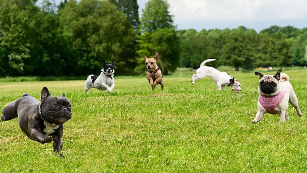 Know these pros and cons of dog parks before taking your dog there!