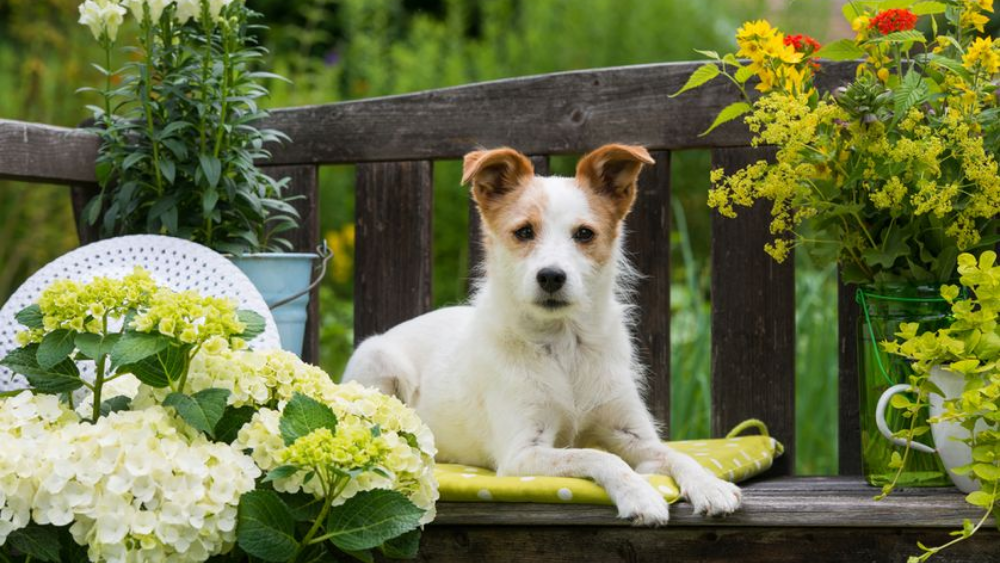 7 Dog-Safe Houseplants to have around